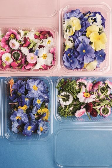 Edible Flowers And Petals From Maddocks Farm