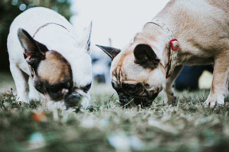 Pets at Weddings | Fishley Hall Rustic Barn Wedding | Darina Stoda Photography
