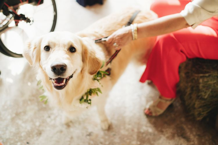Labrador Dog   Pastel Wedding at Tommy Vitello, Italy   Planning & Styling by Agnese Sogna Sempre   Matrimoni all'Italiana Photography   Amu Wedding Videos