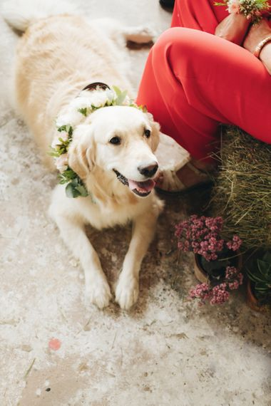 Pet Dog with Floral Collar   Pastel Wedding at Tommy Vitello, Italy   Planning & Styling by Agnese Sogna Sempre   Matrimoni all'Italiana Photography   Amu Wedding Videos