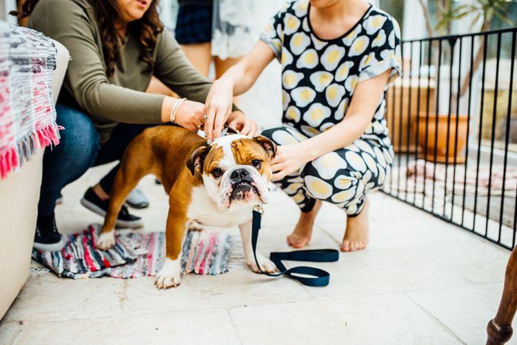 Jackson The Bulldog | Michelle Wood Photography