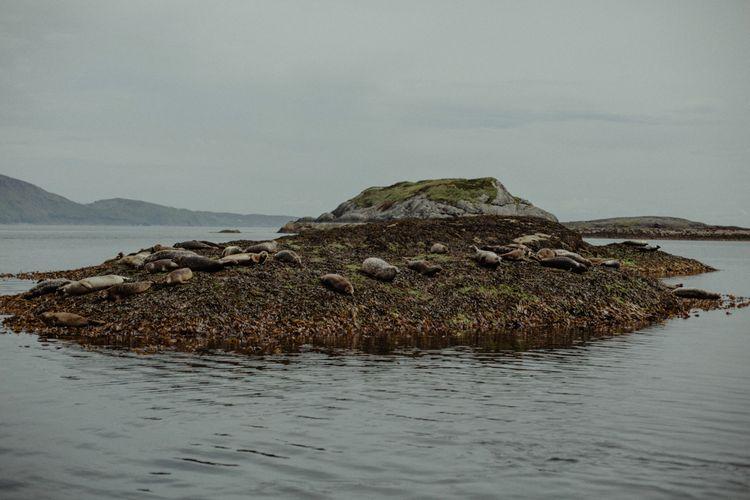 Seals | Isle of Sky Elopement Wedding | Wonderful & Strange Photography