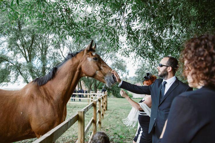 Horse   Natalie J Weddings Photography