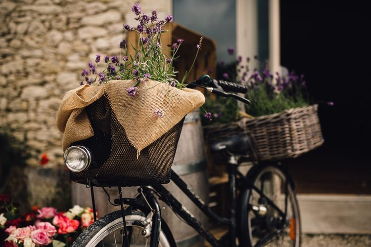 Vintage Bicycle Lavender Plants