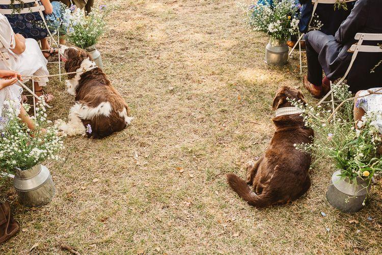 Dogs at weddings. Photography by Derek Smietana