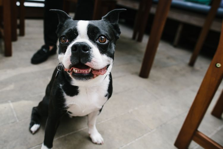 French Bull Dog | Bright Wedding at The Oyster Shed in London | Chris Barber Photography