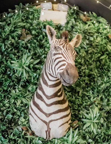 Zebra Wedding Venue Decor