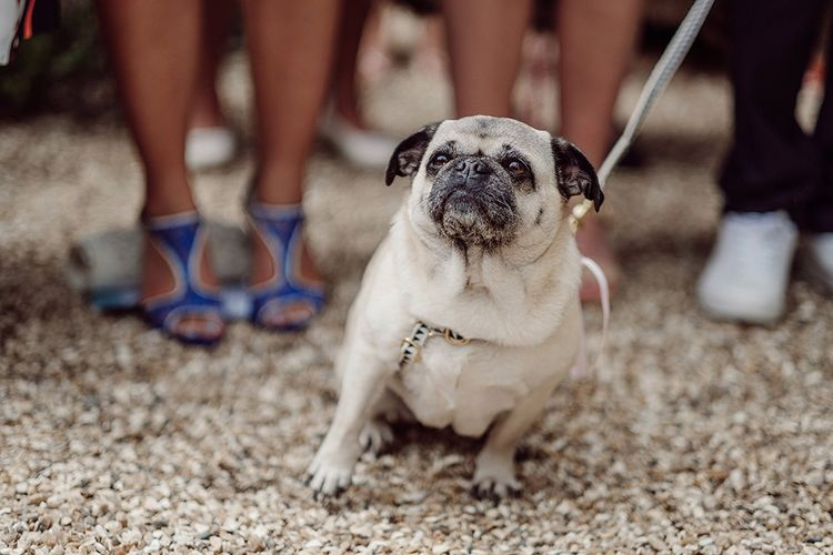 Dogs At Weddings // Stylish Minimal Wedding At River Cottage With Grooms In Reiss & Hugo Boss Images By Jason Mark Harris And Film From Harris Films
