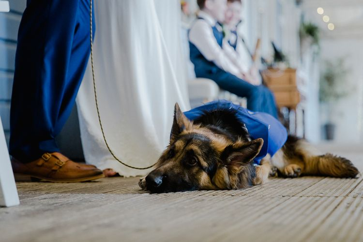 Pet Alsatian | Lusty Glaze Beach Wedding Newquay Cornwall | Alexa Poppe PhotographyLusty Glaze Beach Wedding Newquay Cornwall | Alexa Poppe Photography
