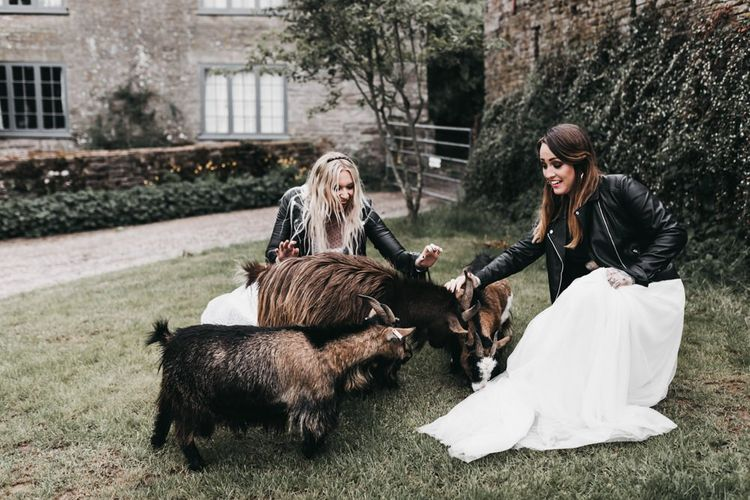 Brides petting the goats at The Drovers wedding venue