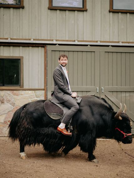 Groom in suit supply suit on a bull