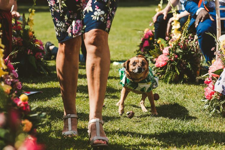 Dog Ring Bearer | Colourful Wedding Fiesta at Abbotsbury Wedding in Weymouth, Dorset | Photography by Paul Underhill.