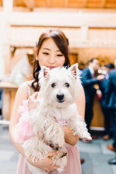 Cute white dog at wedding ceremony