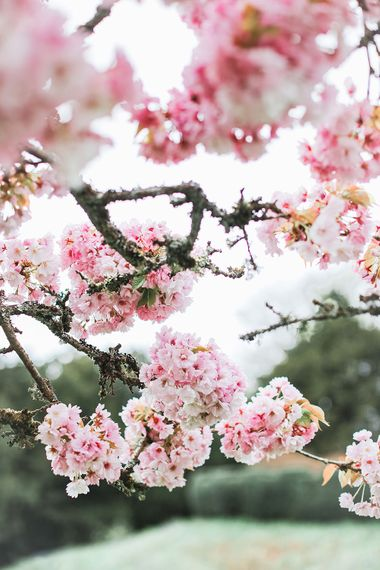 Pink Blossom | Effortless French Chic at Hale in Hampshire | Charlotte Wise Fine Art Photography