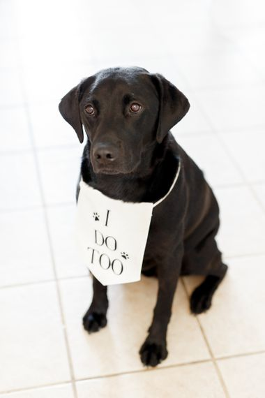 Pet dog with I Do Too bib on