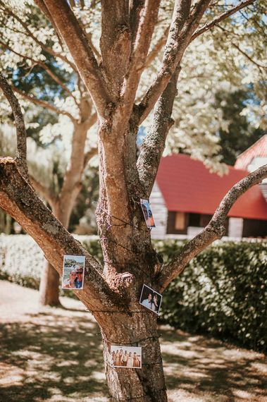 Tree Wrapped in Polaroid Pictures
