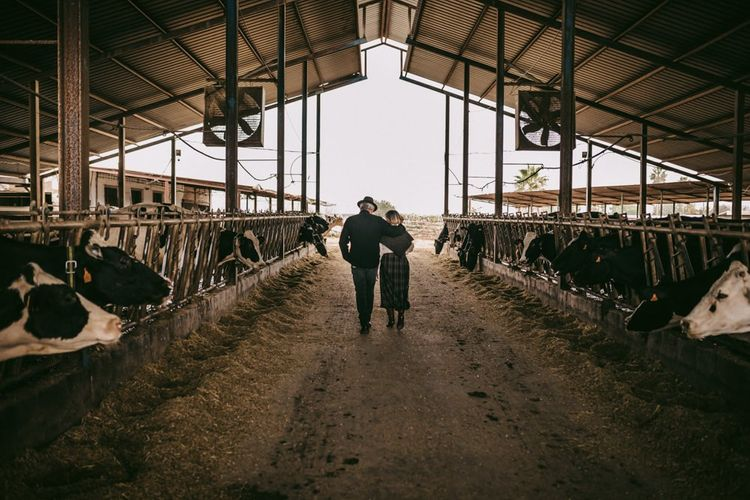 golden wedding anniversary portrait at a Cattle barn