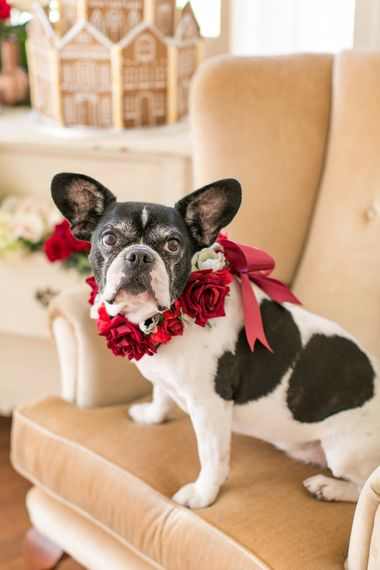 Floral Collar For Dog At Wedding // Gingerbread House For A Festive Christmas Wedding With Red And White Florals Stag Motif Stationery Planned & Styled By La Fete Anneli Marinovich Photography