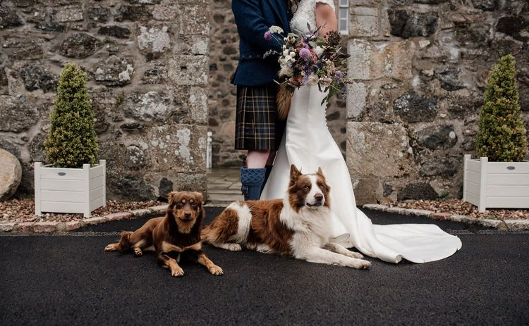 Bride and groom portrait with their pet dogs by Aberdeen wedding photographer