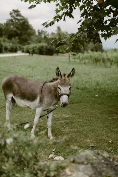 Donkey | Outdoor Boho Wedding at Chateau le Tour, France | Adam and Grace Photography | Head and Heart Films
