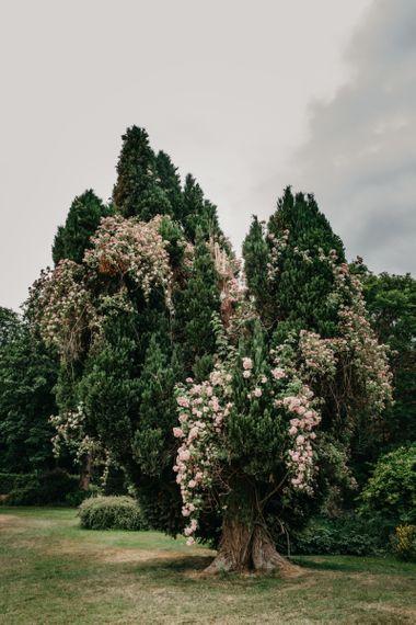 Tree at Killruddery House and Gardens Wedding Venue in Ireland