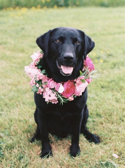 Dog With Floral Collar At Wedding // Bramble & Wild Florist