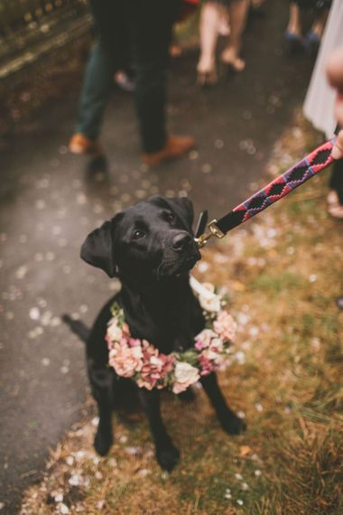 Lyra the dog with pink wedding flowers
