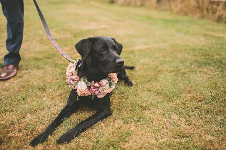 Pets at wedding with flower collar to match pale blue bridesmaid dresses with blush flower bouquets