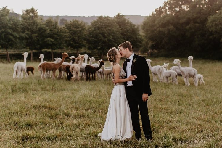 Bride and Groom In Field of Alpacas