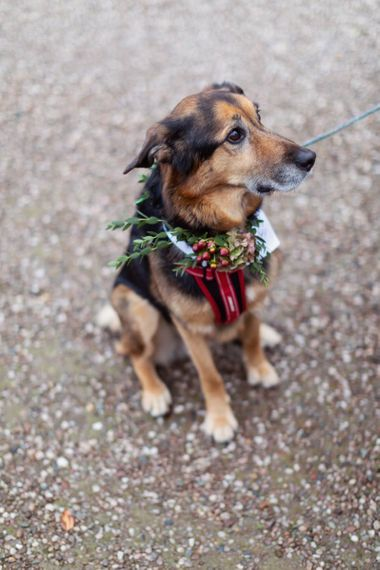 Pet Dog with Winter Flower Collar