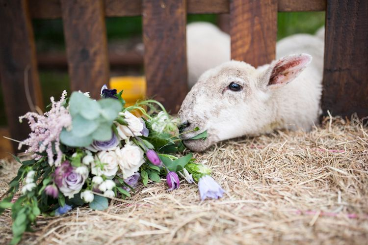Farm Wedding // Sugar Loaf Barn Wedding // Pale Grey Off The Shoulder Bridesmaids Dresses Rewritten // Groom In Harris Tweed // Hog Roast Evening Buffet // Eleanor Jane Photography