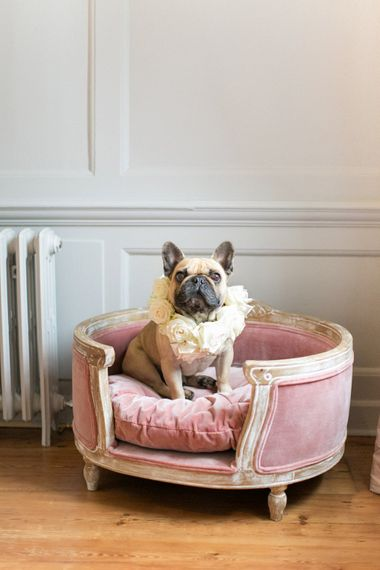 Pug with Flower Collar | Spring Equinox at Thorpe Manor Wedding Venue by Revival Rooms | Anneli Marinovich Photography