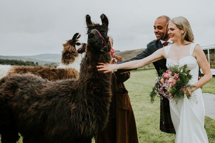 Llamas at Scottish marquee wedding