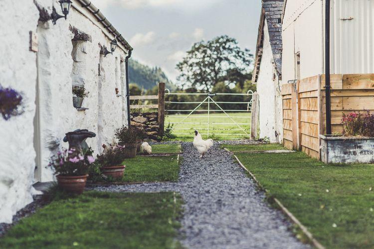 Hafod Farm