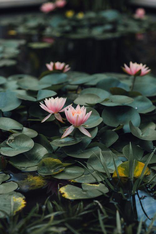 Water Lily at Syon Park Wedding Venue