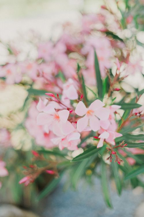 Blush Pink Flowers | Intimate Destination, Family Wedding Planned by The Knot in Italy Weddings at Castello Il Palagio , Italy | Linda Nari Photography