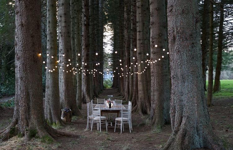 Festoon Lights For Outdoor Wedding Reception