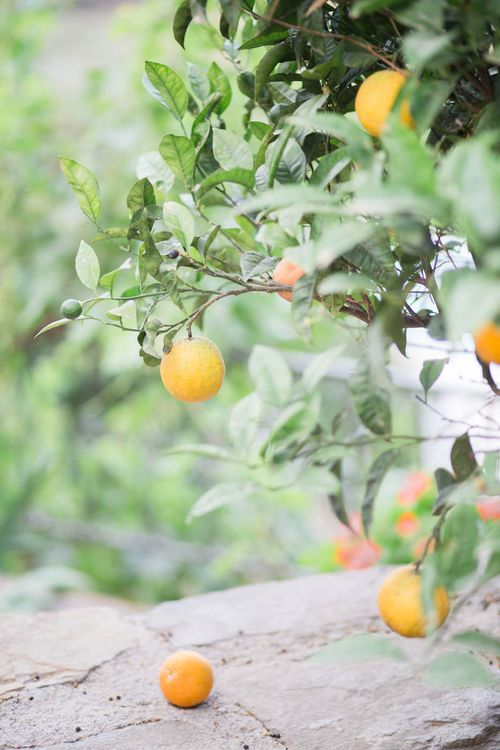 Lemons   Intimate Outdoor Destination Wedding at Kinsterna Hotel & Spa in Greece   Cecelina Photography