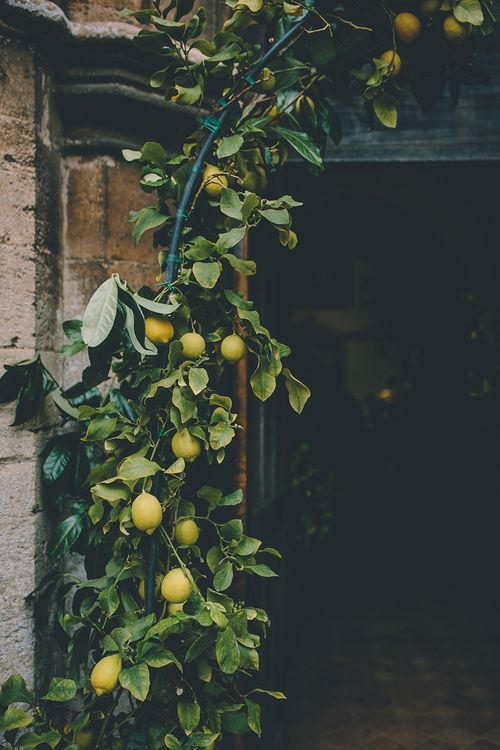 Lemon Tree Arch | Classic Marquee Wedding at Kimberley Hall in Norfolk | Story + Colour Photography | Driftend Films