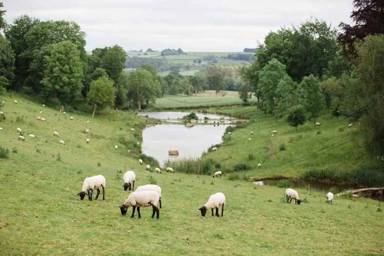 Sheep | Beautiful Classic Wedding at Cornwell Manor | Lucy Davenport Photography