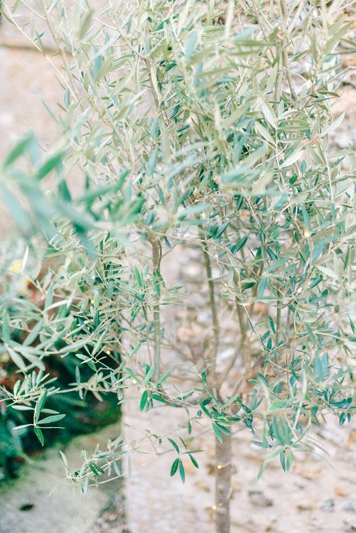 Olive Tree Wedding Decor