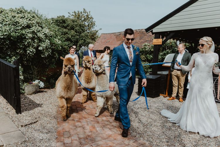 Bride in Lace Allure Bridals Wedding Dress with Long Sleeves  and Groom in Blue Hugo Boss Suit  Holding Alpacas Leads