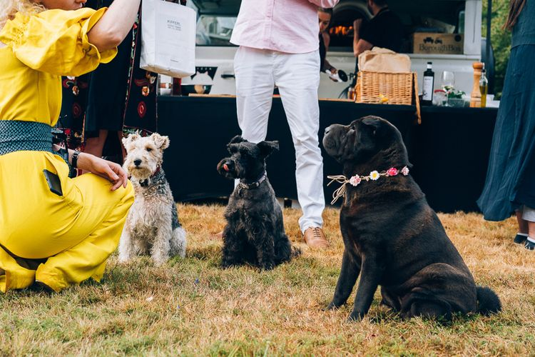 Dogs At Wedding // Images By Casey Avenue Photography