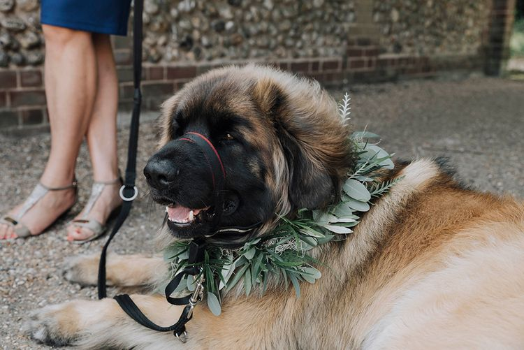 Pet Dog With Greenery Collar   Wedding Weekend at West Lexham Manor, Norfolk   Megan Duffield Photography