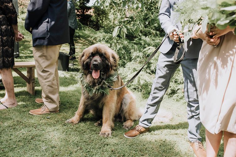 Pet Dog with Foliage Collar   Wedding Weekend at West Lexham Manor, Norfolk   Megan Duffield Photography