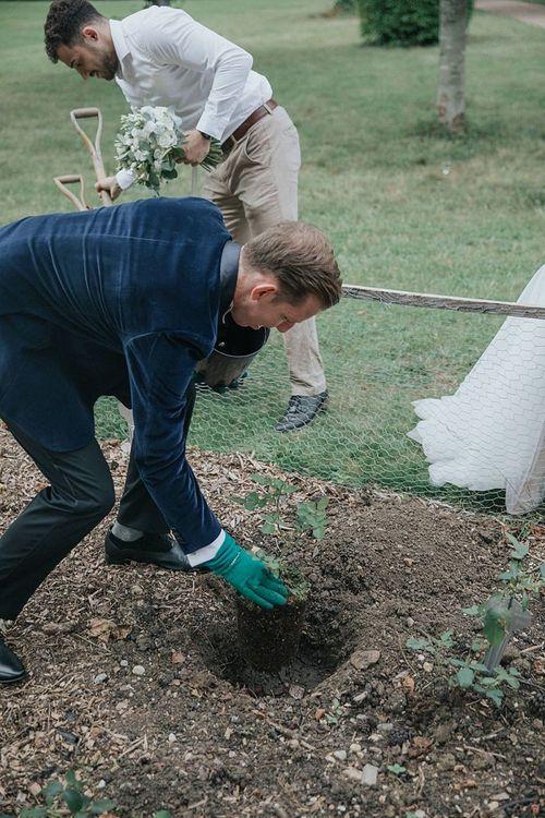 Groom Planting Rosebush For Tree Planting Ceremony