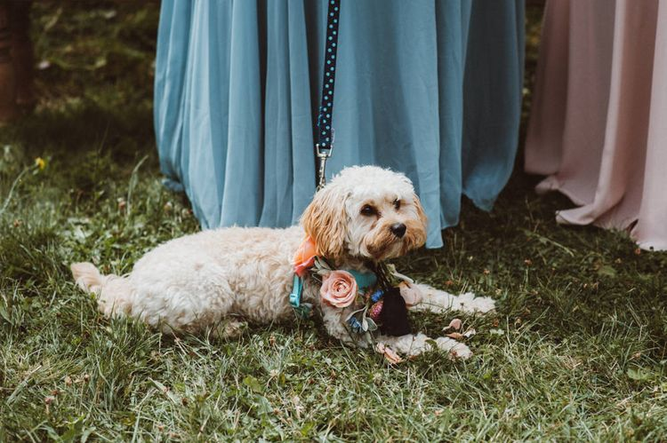 Cockapoo Dog with Floral Collar