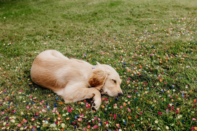 Pet dog at wedding surrounds by confetti