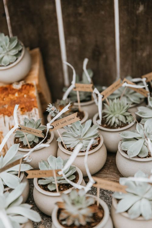 Individual Hand Grown Succulent Wedding Favours in Pots