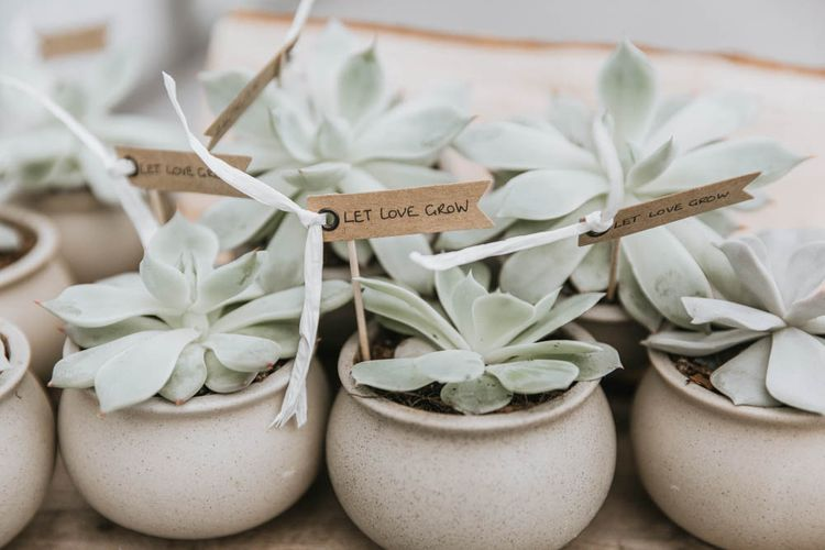 Hand Grown Succulent Wedding Favours in Individual Pots